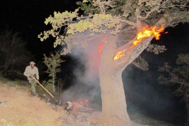 12 هکتار جنگل ابر دچار حریق شد