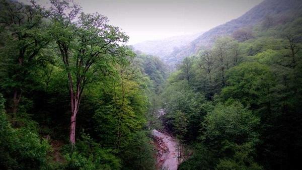 توسعه گردشگری و اختصاص اعتبار ویژه برای حفاظت از جنگل های هیرکانی