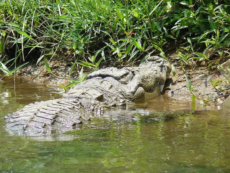 آشنایی با مزرعه تمساح بانکوک
