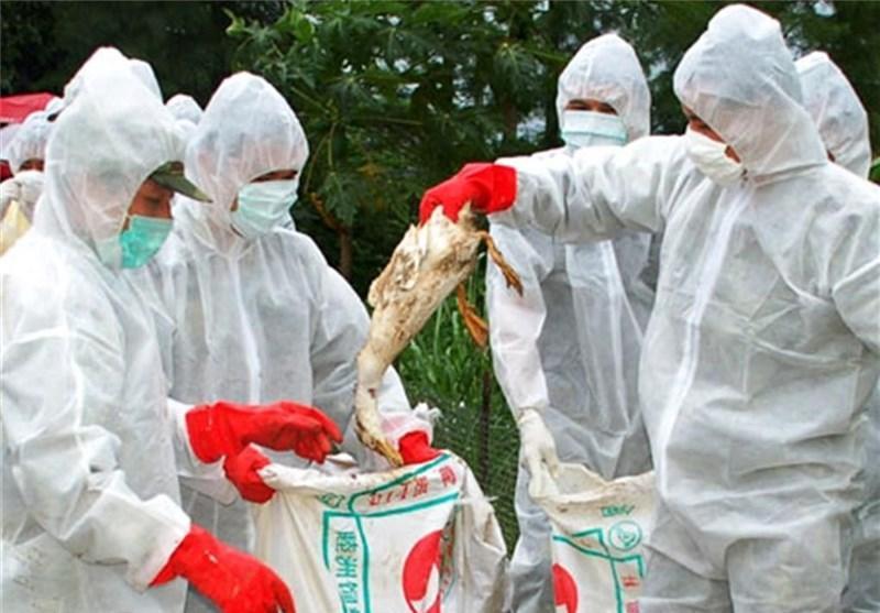 گزارش 3 مورد دیگر از ابتلا به ویروس جدید آنفلوآنزای مرغی در شرق چین