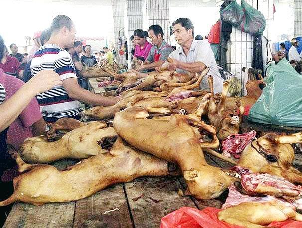 اعتراض مدافعان حقوق حیوانات به جشنواره گوشت سگ در چین