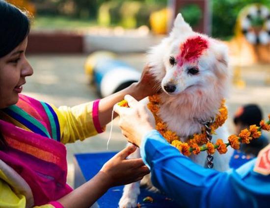 فستیوال سالانه مردم نپال برای قدردانی از سگ ها!