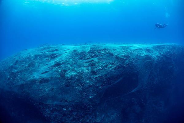 برترین عکس های اقیانوسی در سال 2020