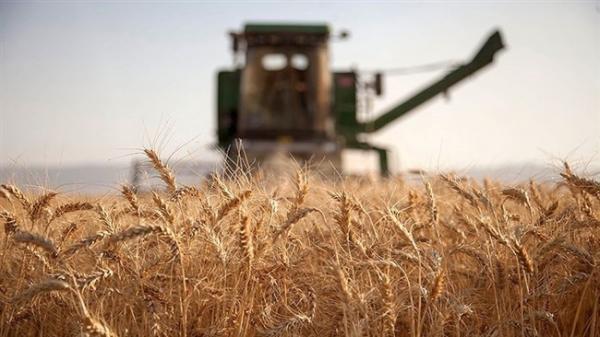 لحظه شماری کشاورزان برای اصلاح نرخ خرید تضمینی گندم