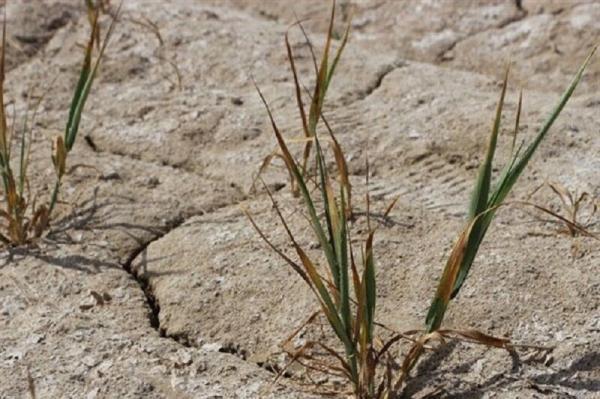 خبرنگاران میزان بارندگی در دشتی 63 درصد کاهش یافت